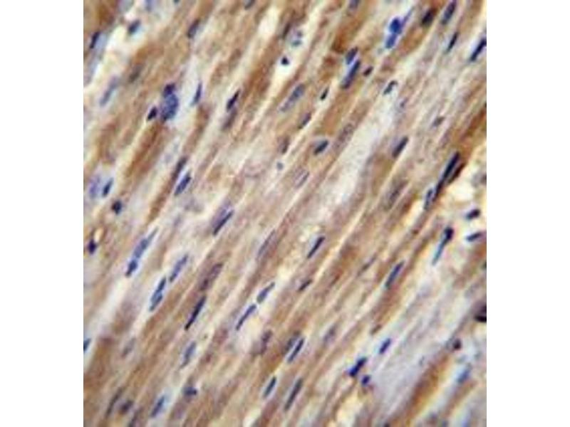 Immunohistochemistry (Paraffin-embedded Sections) (IHC (p)) image for anti-F2RL2 antibody (Coagulation Factor II (thrombin) Receptor-Like 2) (AA 20-50) (ABIN952152)