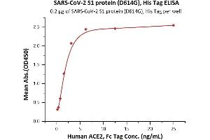Image no. 3 for SARS-CoV-2 Spike S1 (D614G) protein (His tag) (ABIN6953175)