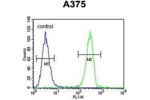 Image no. 2 for anti-Homeobox A9 (HOXA9) (AA 243-272), (C-Term) antibody (ABIN952776)