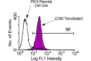 Flow Cytometry (FACS) image for anti-CD80 antibody (CD80)  (FITC) (ABIN371005)