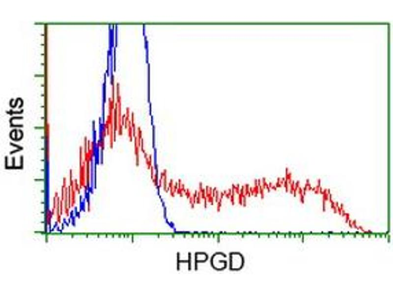 Image no. 1 for anti-Hydroxyprostaglandin Dehydrogenase 15-(NAD) (HPGD) antibody (ABIN1496364)