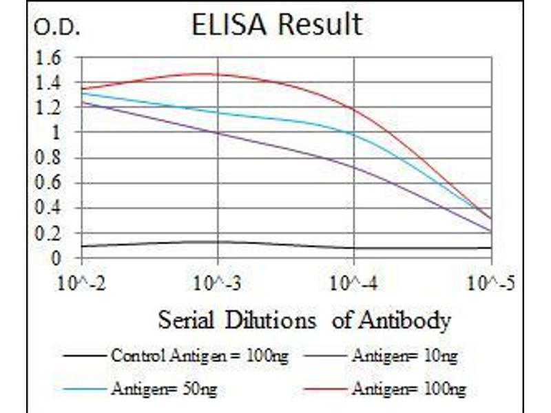 ELISA image for anti-Argininosuccinate Synthase 1 (ASS1) antibody (ABIN4880550)