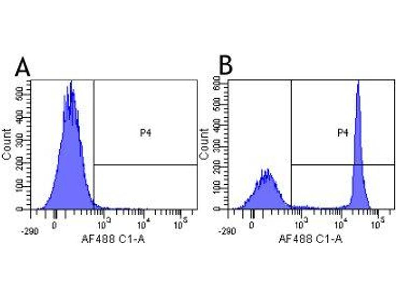 quantitative investigation of immunoglobulins •quantitative measure of each protein class may  immunoglobulins  requires further investigation to determine if the.