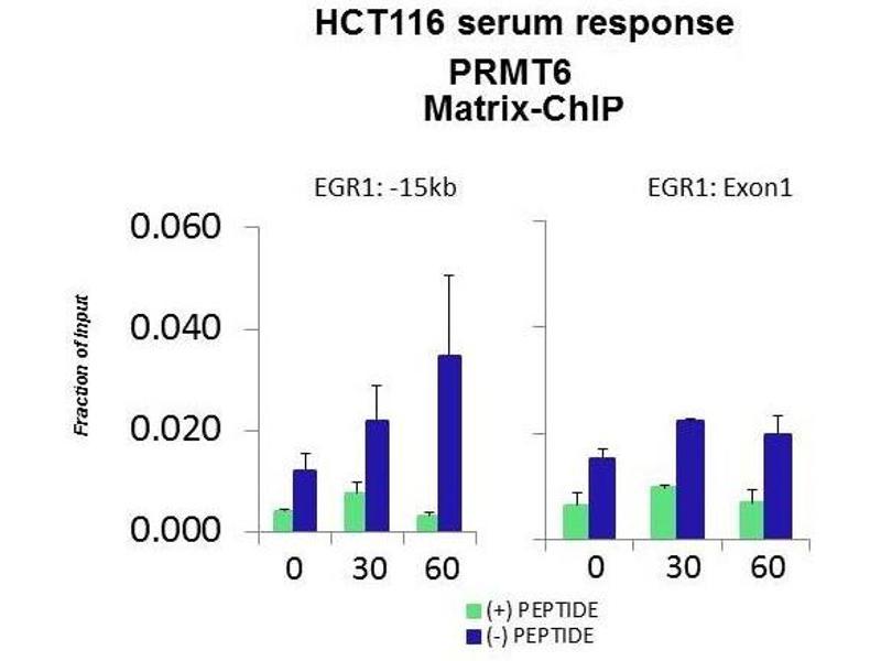 Chromatin Immunoprecipitation (ChIP) image for anti-Protein Arginine Methyltransferase 6 (PRMT6) (Middle Region) antibody (ABIN2778658)