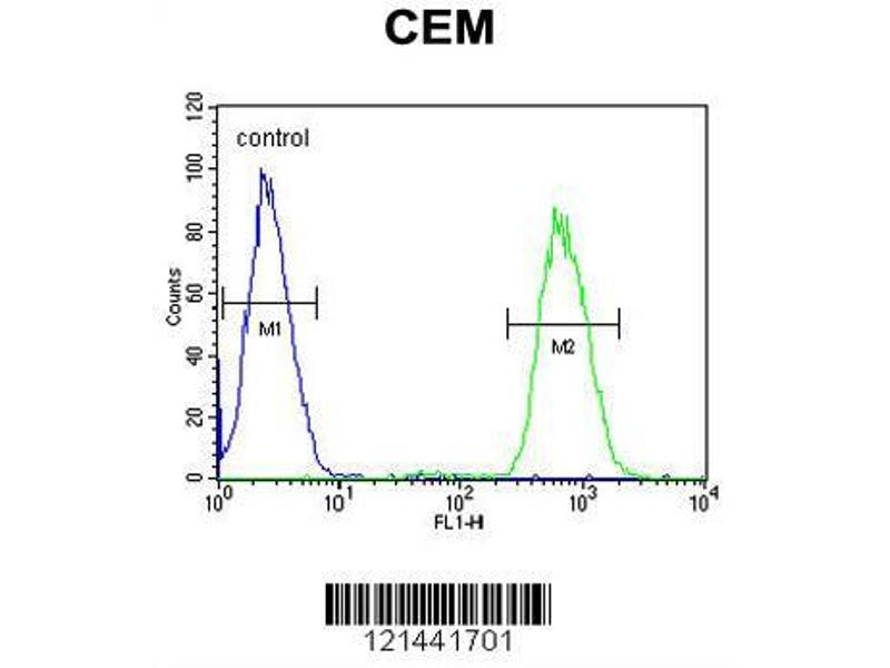 Flow Cytometry (FACS) image for anti-Galactose 3-O-Sulfotransferase 1 (GAL3ST1) (AA 88-116), (Center) antibody (ABIN652831)