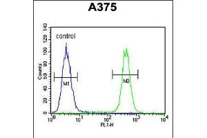 Image no. 3 for anti-Chromosome 6 Open Reading Frame 170 (C6ORF170) (AA 112-139), (N-Term) antibody (ABIN5539193)