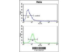 Flow Cytometry (FACS) image for anti-EPH Receptor B3 (EPHB3) antibody (ABIN652365)
