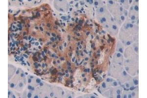 Immunohistochemistry (Paraffin-embedded Sections) (IHC (p)) image for anti-Bone Morphogenetic Protein 7 (BMP7) (AA 292-430) antibody (ABIN2901062)