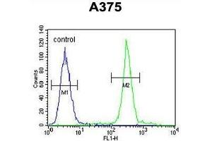 Image no. 1 for anti-ADP-Ribosylation Factor-Like 8A (ARL8A) (AA 123-150), (Middle Region) antibody (ABIN950507)