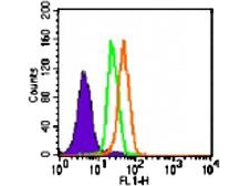 image for anti-Toll-Like Receptor 5 (TLR5) antibody (ABIN532010)