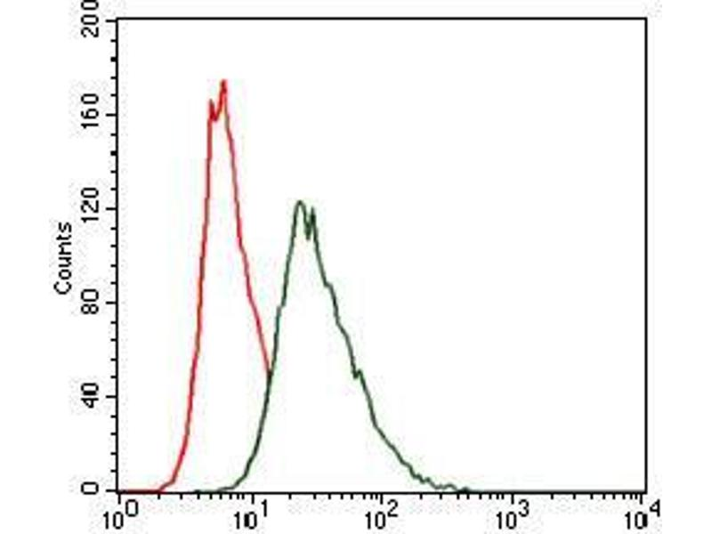 Flow Cytometry (FACS) image for anti-Heat Shock Transcription Factor 4 (HSF4) antibody (ABIN969527)