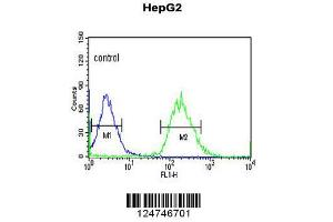 Flow Cytometry (FACS) image for anti-Protein YMEL-1 (YMEL-1) (AA 191-219), (N-Term) antibody (ABIN651076)