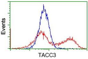Image no. 5 for anti-Transforming, Acidic Coiled-Coil Containing Protein 3 (TACC3) antibody (ABIN1498100)