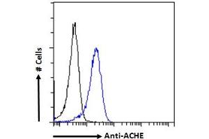 Image no. 5 for anti-Acetylcholinesterase (AChE) (C-Term) antibody (ABIN185357)
