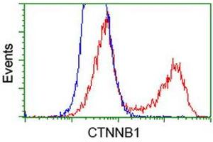 Flow Cytometry (FACS) image for anti-CTNNB1 antibody (Catenin (Cadherin-Associated Protein), beta 1, 88kDa) (ABIN2454170)