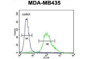 Image no. 3 for anti-Zinc Finger Protein 98 (ZNF98) (AA 486-516), (C-Term) antibody (ABIN955752)