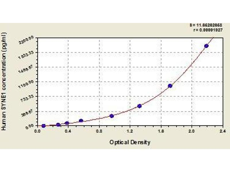 Spectrin Repeat Containing, Nuclear Envelope 1 (SYNE1) ELISA Kit