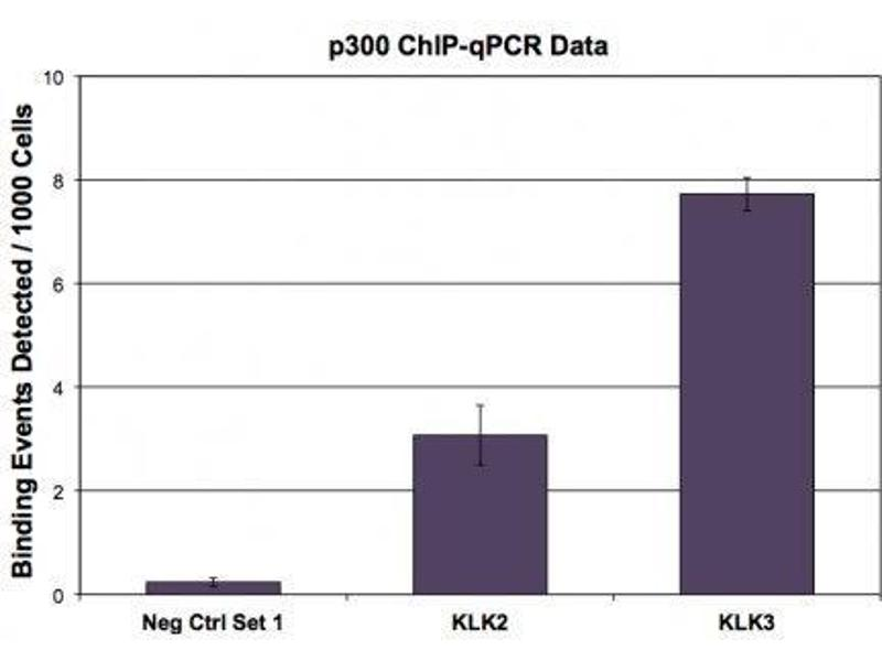 Chromatin Immunoprecipitation (ChIP) image for anti-E1A Binding Protein P300 (EP300) antibody (ABIN2668569)