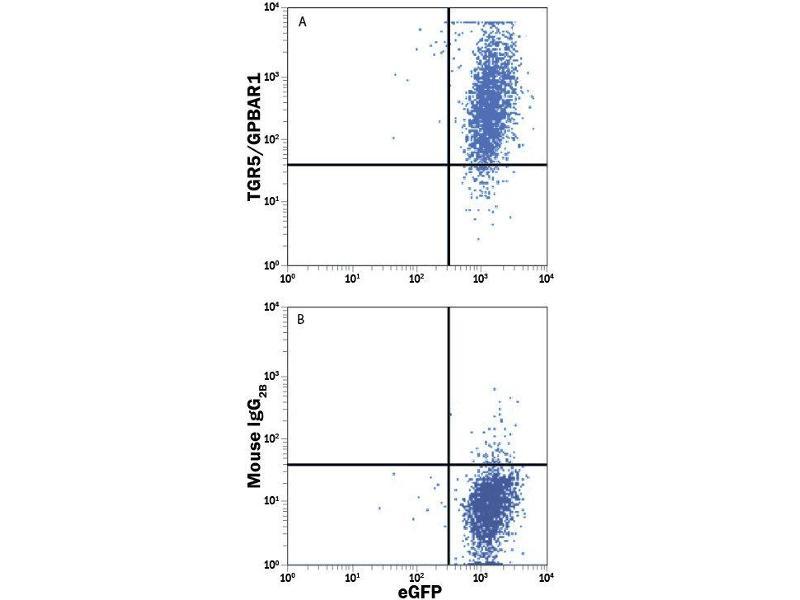 Flow Cytometry (FACS) image for anti-GPBAR1 antibody (G Protein-Coupled Bile Acid Receptor 1) (AA 1-330) (Allophycocyanin) (ABIN4895382)
