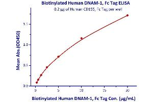 Image no. 1 for CD226 Molecule (CD226) (AA 19-247) (Active) protein (Fc Tag,AVI tag,Biotin) (ABIN4949020)