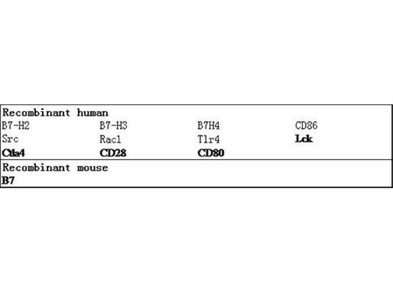 ELISA image for CD86 Molecule (CD86) ELISA Kit (ABIN2691104)