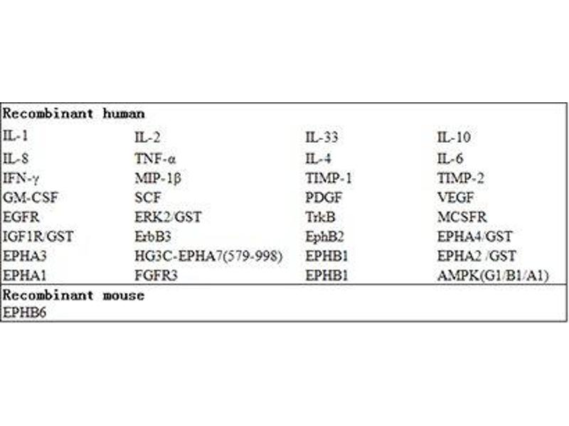 EPH Receptor B6 (EPHB6) ELISA Kit (2)