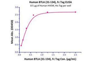 Image no. 2 for B and T Lymphocyte Associated (BTLA) (AA 31-134) (Active) protein (Fc Tag) (ABIN2180655)