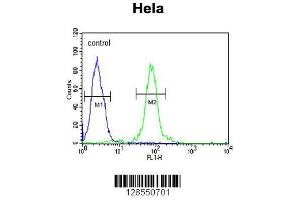 Image no. 1 for anti-F-Box and WD Repeat Domain Containing 8 (FBXW8) (AA 270-299), (Center) antibody (ABIN654676)
