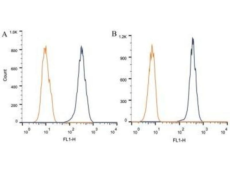 Flow Cytometry (FACS) image for anti-ATP-Binding Cassette, Sub-Family A (ABC1), Member 1 (ABCA1) (N-Term) antibody (ABIN4277133)