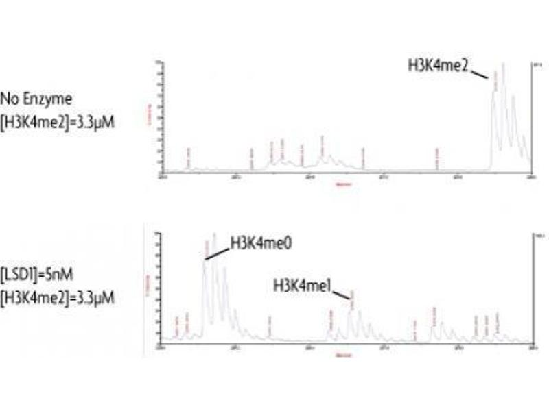 Image no. 1 for Lysine (K)-Specific Demethylase 1A (KDM1A) protein (DYKDDDDK Tag) (ABIN2669678)