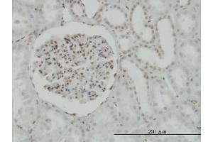 Immunostaining (ISt) image for anti-CAMP Responsive Element Binding Protein 1 (CREB1) (AA 1-95), (partial) antibody (ABIN560461)