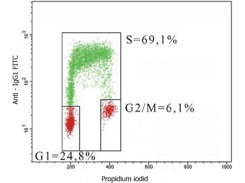 Image no. 1 for anti-Bromodeoxyuridine (BrDU) antibody (ABIN93883)