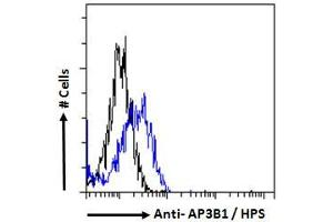 Image no. 1 for anti-Adaptor-Related Protein Complex 3, beta 1 Subunit (AP3B1) (N-Term) antibody (ABIN6391367)