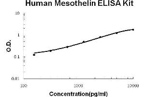 Image no. 1 for Mesothelin (MSLN) ELISA Kit (ABIN2859340)
