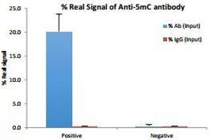 Image no. 1 for 5mC Antibody with Positive Primer Set (ABIN3071710)