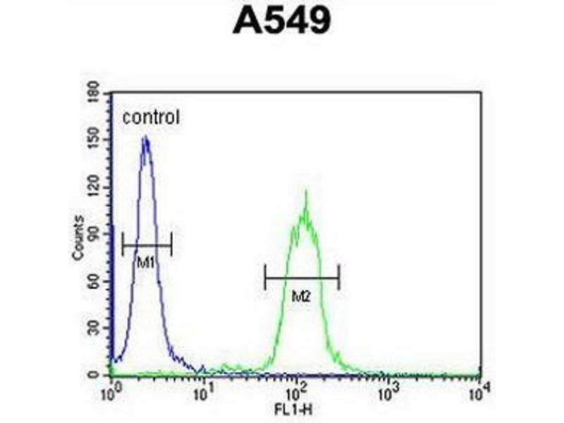Flow Cytometry (FACS) image for anti-Clusterin (CLU) (AA 71-99), (N-Term) antibody (ABIN950467)