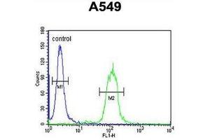 Flow Cytometry (FACS) image for anti-Clusterin antibody (CLU) (AA 71-99) (ABIN950467)
