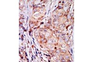 image for anti-Tribbles Homolog 3 (Drosophila) (TRIB3) (N-Term) antibody (ABIN360673)