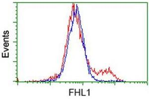 Image no. 1 for anti-Four and A Half LIM Domains 1 (FHL1) antibody (ABIN1500975)