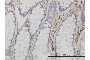 Immunostaining (ISt) image for anti-Annexin V antibody (Annexin A5) (AA 1-320) (ABIN559879)
