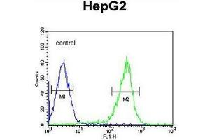 Image no. 1 for anti-Pterin-4 alpha-Carbinolamine Dehydratase/dimerization Cofactor of Hepatocyte Nuclear Factor 1 alpha (PCBD1) (AA 27-56), (Middle Region) antibody (ABIN954023)