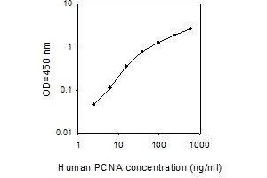 Image no. 1 for Proliferating Cell Nuclear Antigen (PCNA) ELISA Kit (ABIN4884109)