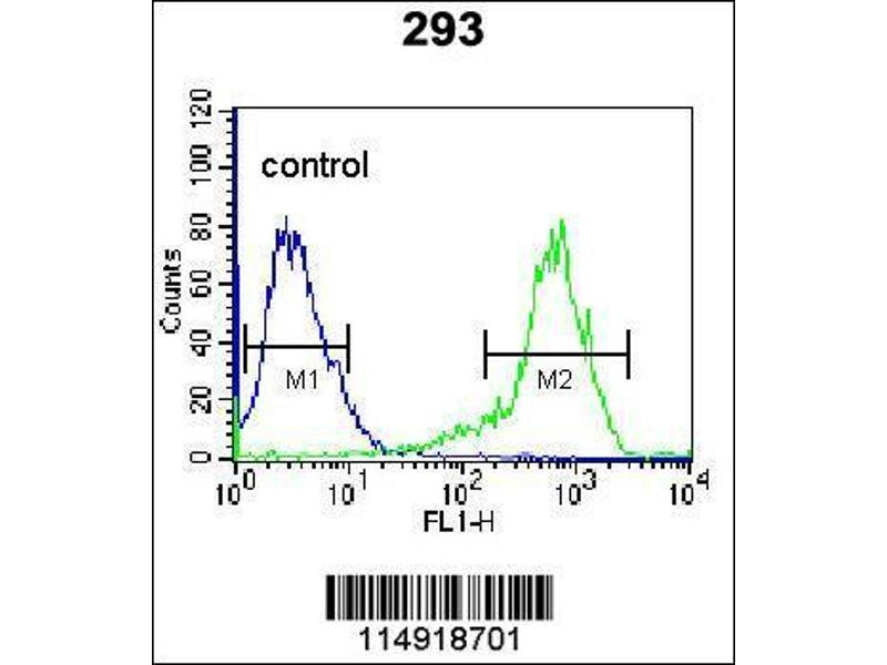 Flow Cytometry (FACS) image for anti-Lysyl-tRNA Synthetase (KARS) (AA 70-98), (N-Term) antibody (ABIN655049)