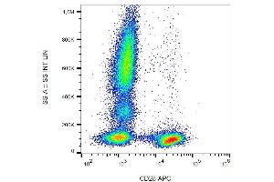 Flow Cytometry (FACS) image for anti-CD28 (CD28) antibody (APC) (ABIN349705)