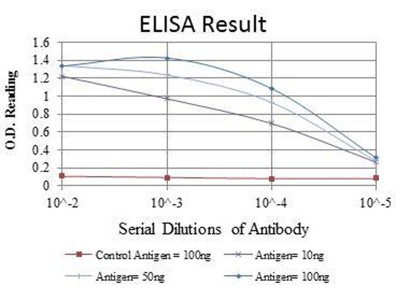 ELISA image for anti-Actin, alpha 2, Smooth Muscle, Aorta (ACTA2) antibody (ABIN968947)