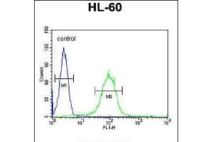 Image no. 2 for anti-Carbohydrate (N-Acetylglucosamine-6-O) Sulfotransferase 2 (CHST2) (AA 309-335) antibody (ABIN5534936)