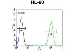 Flow Cytometry (FACS) image for anti-ADA antibody (Adenosine Deaminase) (C-Term) (ABIN950276)