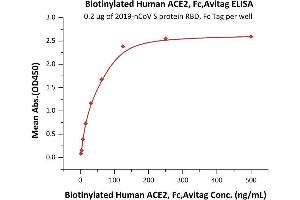 Image no. 1 for Angiotensin I Converting Enzyme 2 (ACE2) (AA 18-740) protein (Fc Tag,AVI tag,Biotin) (ABIN6952458)