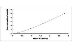 Image no. 1 for Transient Receptor Potential Cation Channel, Subfamily M, Member 6 (TRPM6) ELISA Kit (ABIN6960126)