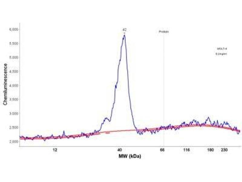 Simple Western (SimWes) image for anti-CD3g Molecule, gamma (CD3-TCR Complex) (CD3G) antibody (ABIN4291749)
